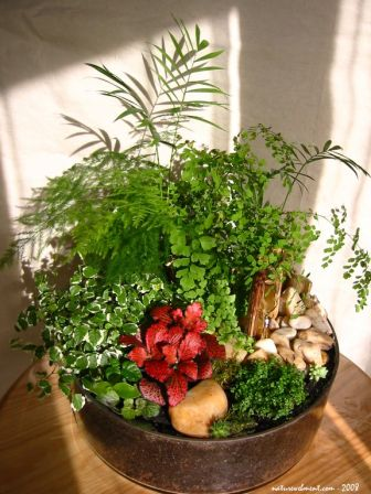 Petit jardin d 39 int rieur - Decoration d un petit jardin ...
