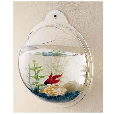 Des aquariums originaux for Aquarium en boule