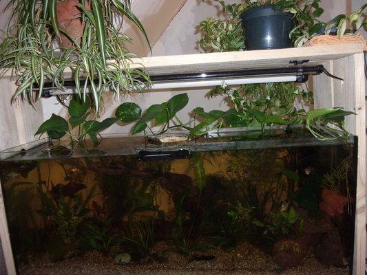"""Avoir Un Aquarium un aquarium """"low-tech"""" ouvert, filtré par les plantes ! - blognature.fr"""