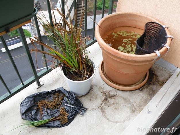 Un bassin pour le balcon for Bassin poisson installation