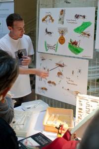 """Le stand """"fourmis"""" BlogNature à la fête de la science 2012 en Avignon"""