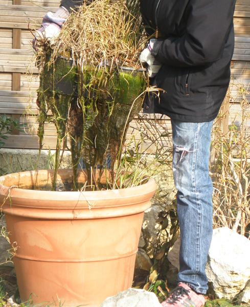 gestion de l 39 eau au jardin un bassin sans pompe ni. Black Bedroom Furniture Sets. Home Design Ideas