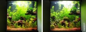 Aménagement aquarium paysager blognature