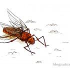 Une reine fourmis