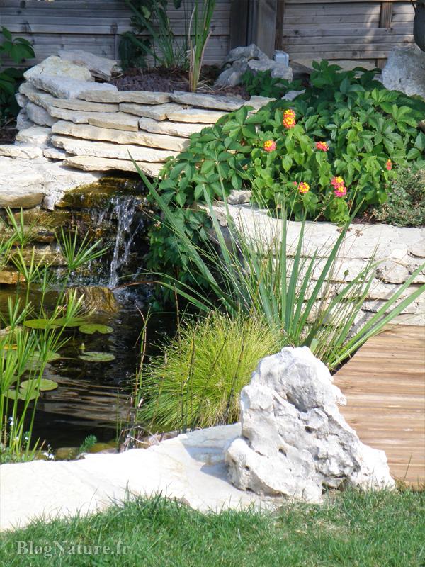 bassin_jardin_galerie_113_Blognature