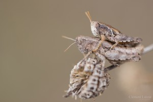 kamasutra_insectes_blognature_103