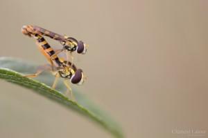 kamasutra_insectes_blognature_110