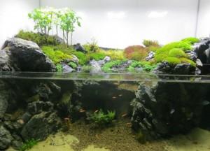 aquarium ouvert