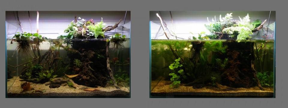 aquarium_ouvert_6_mois_blognature