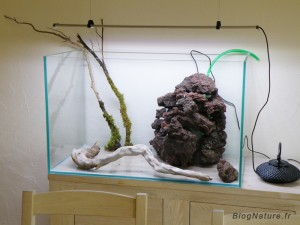 aquarium_ouvert_lowtech_blognature_103
