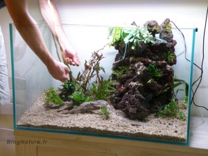 aquarium_ouvert_lowtech_blognature_107
