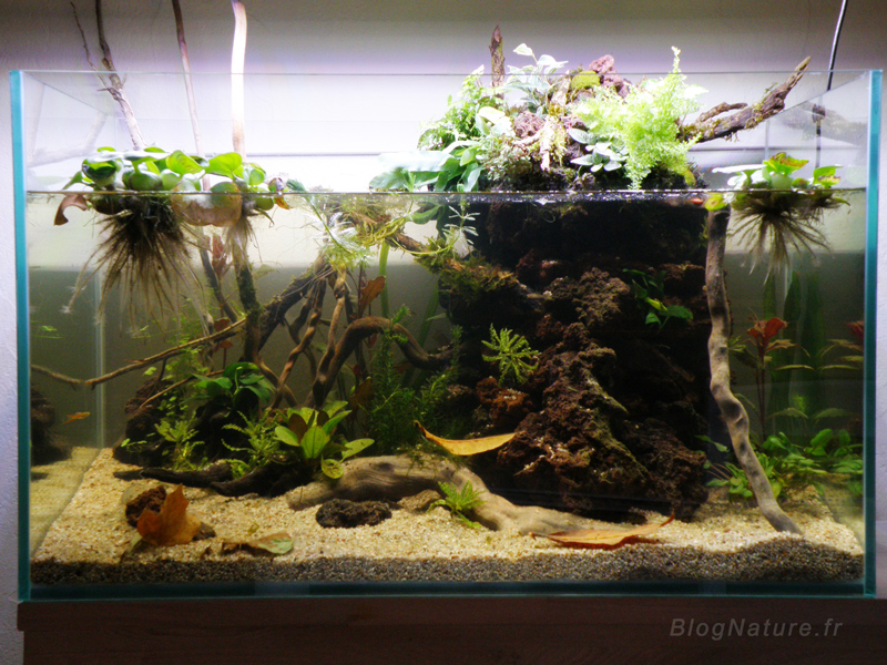 Un aquarium low tech ouvert filtr par les plantes for Nettoyer un aquarium poisson rouge