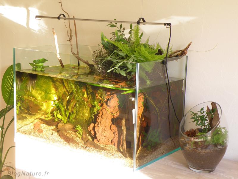 un aquarium low tech ouvert filtr par les plantes. Black Bedroom Furniture Sets. Home Design Ideas