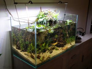 aquarium_ouvert_lowtech_blognature_final_a