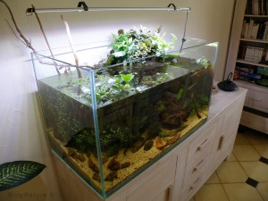 comment faire son propre aquarium