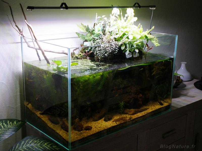 Un aquarium low tech ouvert filtr par les plantes for Terreau aquarium
