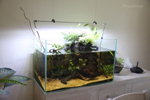 aquarium_ouvert_lowtech_blognature_final_d