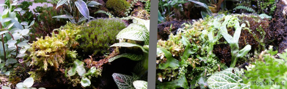 marchantia_blognature