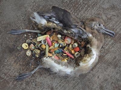 oiseau plastique